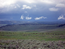 Lamar Valley, Yellowstone NP Royalty Free Stock Image