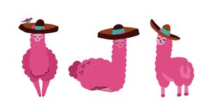 Lamas bonitos e alpacas ajustados no sombreiro Animais de sorriso engra?ados isolados no fundo branco Caráter tirado mão do lama ilustração do vetor