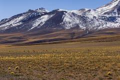Lamas in Los Flamencos National Reserve Stock Photo