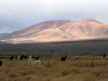 Lamas und Colorfull-Berge Lizenzfreie Stockbilder