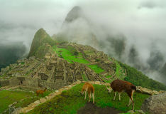 Lamas und Machu Picchu Stockfotografie