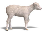 Lamb. Rendering of a young sheep with clipping path and shadow over white Stock Image