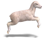 Lamb royalty free illustration