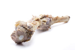 Lamb bone Stock Photo