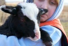 Lamb and boy Royalty Free Stock Image