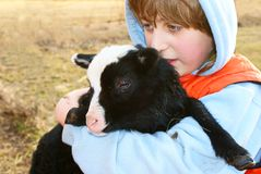 Lamb and boy Stock Images