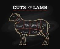Lamb butcher chalkboard scheme. Lamb cuts chart. Sheeps or lambs meat steak butcher chalkboard scheme in retro hand drawn style vector illustration Royalty Free Stock Photos