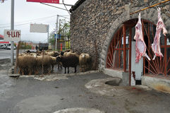 Lamb carcasses near the butcher in Armenia Stock Image