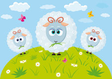 Lamb cute. Illustration of three cute and funny sheep in the meadow Stock Photo