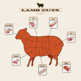 Lamb cuts. Info graphic of the lamb cuts on light background Royalty Free Stock Photos
