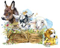 Lamb. donkey. chiken. goat. puppy dog. duckling. watercolor farms animal collection. royalty free illustration