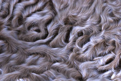 Lamb fur background Stock Photography