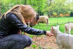 Lamb girl Stock Photos
