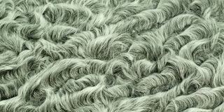 Lamb gray fur. With a beautiful pattern Royalty Free Stock Photography