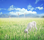 Lamb grazing. Agriculture clean energy. Royalty Free Stock Photos