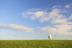 A lamb in a green field with a blue sky in summer Stock Photo