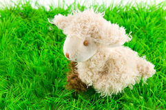 Lamb on green grass Stock Photos