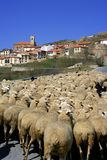 Lamb herd, sheep, gout flock Spanish village Royalty Free Stock Image