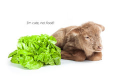 Lamb isolated on white background with salad as ve Royalty Free Stock Photos
