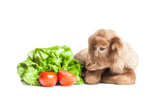 Lamb isolated on white background with salad and t. Cute little brown baby lamb isolated on white backgorund Stock Photography