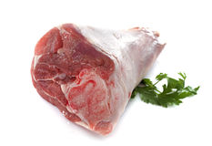 Lamb knuckle Stock Images