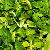 Lamb lettuce salad Stock Images