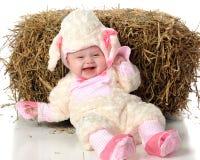 lamb little dumbom Arkivbilder