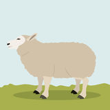 Lamb livestock animal design Stock Image