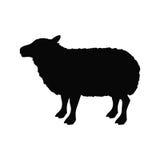 Lamb livestock animal design Royalty Free Stock Photos