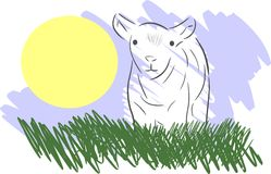 Lamb in a meadow Stock Image