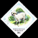 Lamb (Ovis ammon aries), Young animals serie, circa 1982 royalty free stock image