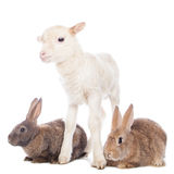 Lamb and rabbits Stock Photo