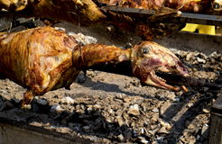 Lamb of roasting on a spit Royalty Free Stock Photos