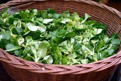 Lamb's lettuce Royalty Free Stock Photos