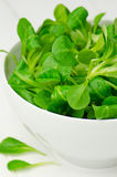 Lamb's lettuce Stock Photos