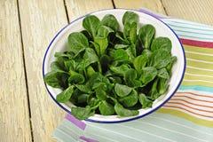 Lamb's lettuce Stock Image