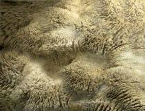 Lamb's Wool. Digital composite of wool Stock Images