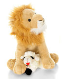 The Lamb Shall Lay Down with the Lion Royalty Free Stock Image