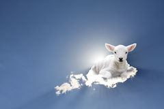 Lamb sitting on the cloud Stock Photos