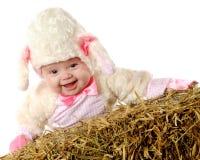 lamb som little skrattar Royaltyfria Bilder