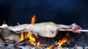 Lamb on spit stock video footage