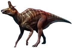Lambeosaurus Royalty Free Stock Images