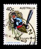 Lamberti variegato di Fairywren Malurus, serie degli uccelli, circa 1979 Immagini Stock