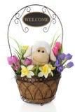 Lambie acoge con satisfacción la primavera Imágenes de archivo libres de regalías
