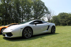 Lambo in pastoral setting Stock Image