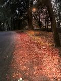 A Lambro Park street full of red leaves in Milan in autumn stock image