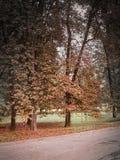 Lambro parka ulica w Mediolan w jesieni zdjęcie stock