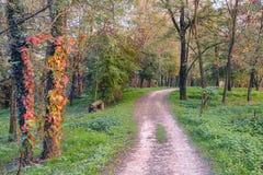 Lambro-Tal Brianza, Italien am Fall Lizenzfreies Stockbild