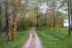 Lambro valley Lombardy, Italy: autumn landscape. Lambro valley Monza Brianza, Lombardy, Italy: bicycle and pedestrian track in the forest at fall royalty free stock photography