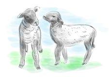 lambs vektor illustrationer